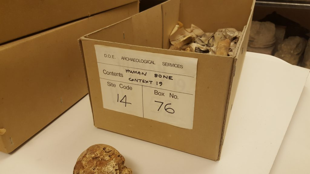 Image of box containing Skeleton 19